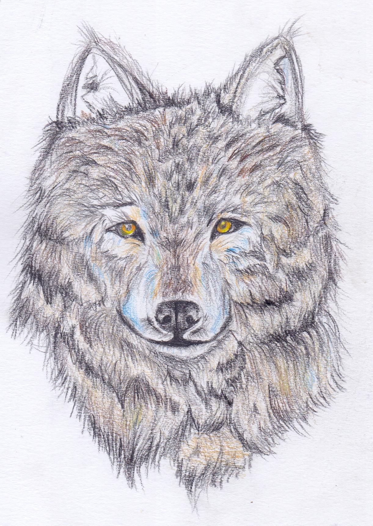 Wolf Head Yellow Eyes